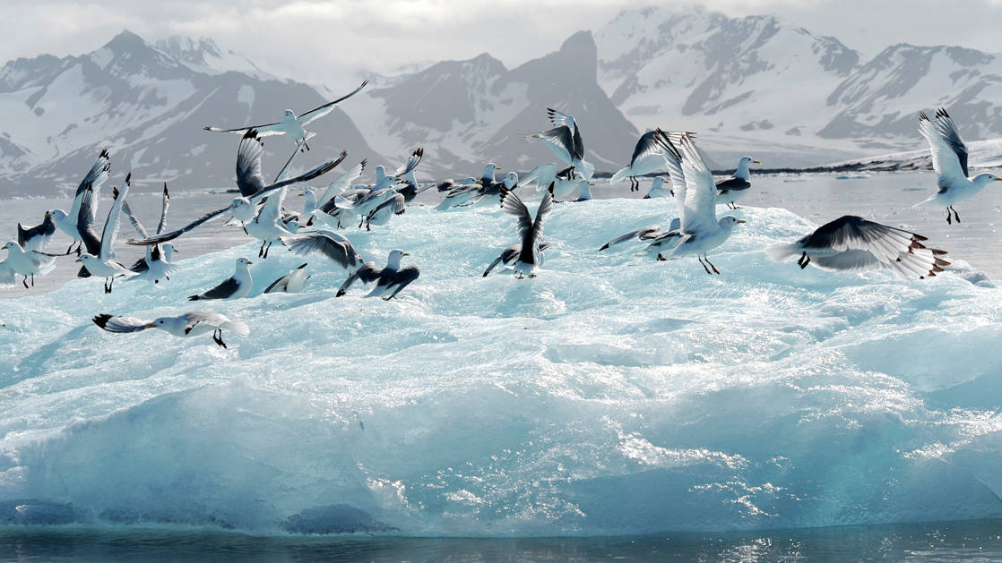 A flock of seabirds swarm around a blue iceberg on the Emblematic Antarctica voyage.