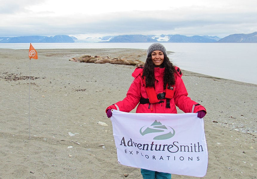 A female traveler wearing a red parka holding a white adventure smith flag stands on an Arctic beach in front of a haul of walrus.