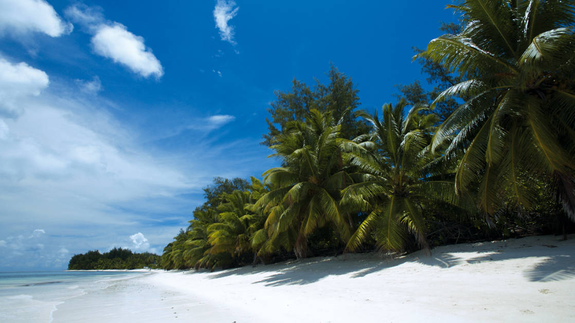 Long white-sand beach lined by swaying palm trees & blue sky during the Pearls of the Caribbean luxury cruise.