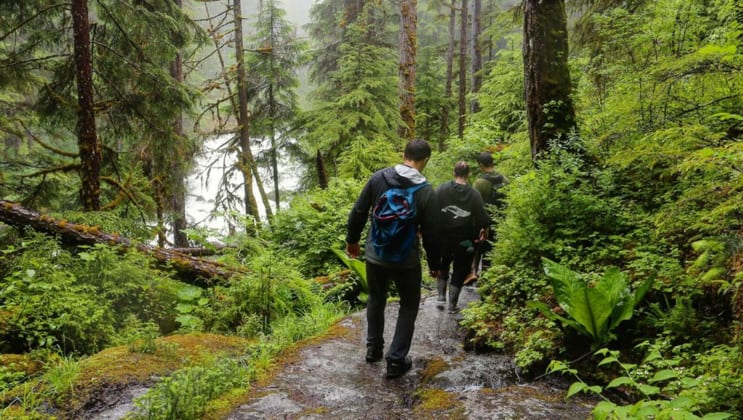 Hikers walk down a path through a lush green rainforest during the Kruzof Explorer Custom Alaska Cruise.