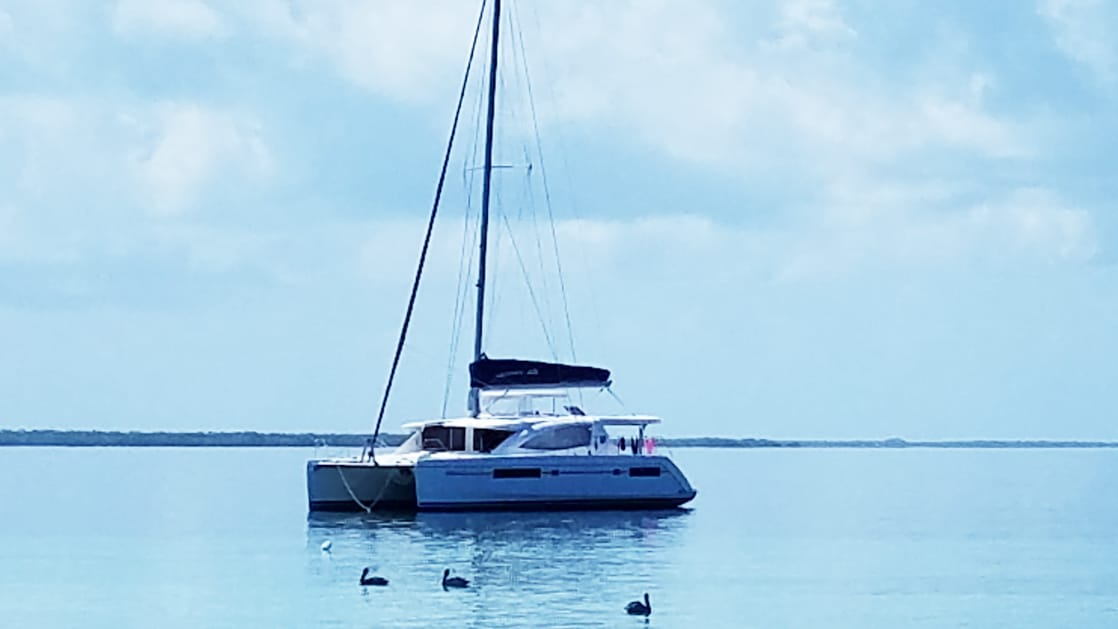 Belize catamaran Endless Options, with white-&-blue motif, sits in calm water on a sunny day while birds swim nearby.