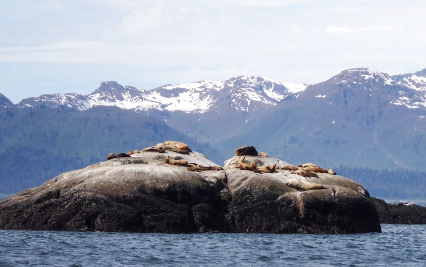 Sea lions bask on a group of rocks that jet from the sea of Alaska behind them a snow capped mountain range, seen on an Alaska small ship cruise.