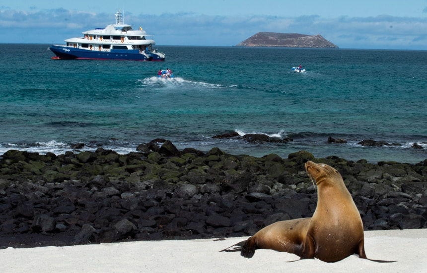 A sea lion basks on the beach on a sunny blue sky day, behind it are two pangas driving towards the Camila Galapagos trimaran, floating in the ocean