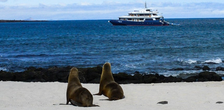 From a beach two sea lions look out over the blue ocean horizon to see the Camila Galapagos trimaran
