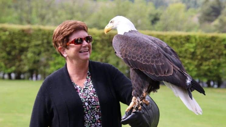 Bald eagle rests on a woman's gloved hand in a falconry demonstration during the Classic Ireland River Cruise.