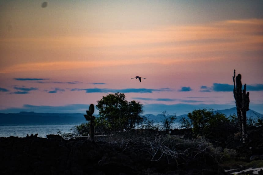 the sky is a pastel sunset of orange and pink. In the air is a black silhouette of a Galapagos flamingo as it flies across the sky.