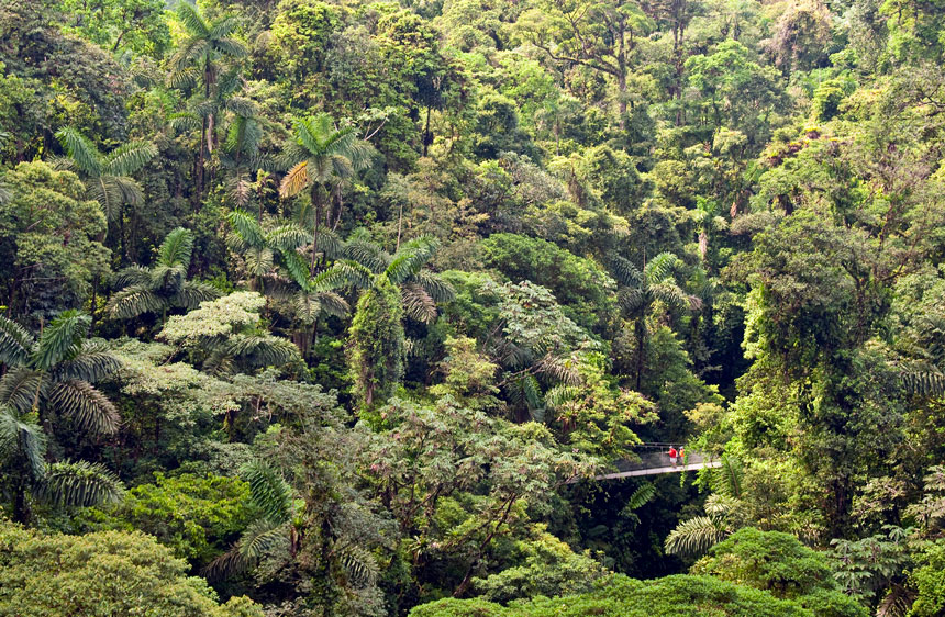 Green lush forest canopy of Costa Rica fills the photo as two travelers walk across a bridge suspended in the air through the jungle.