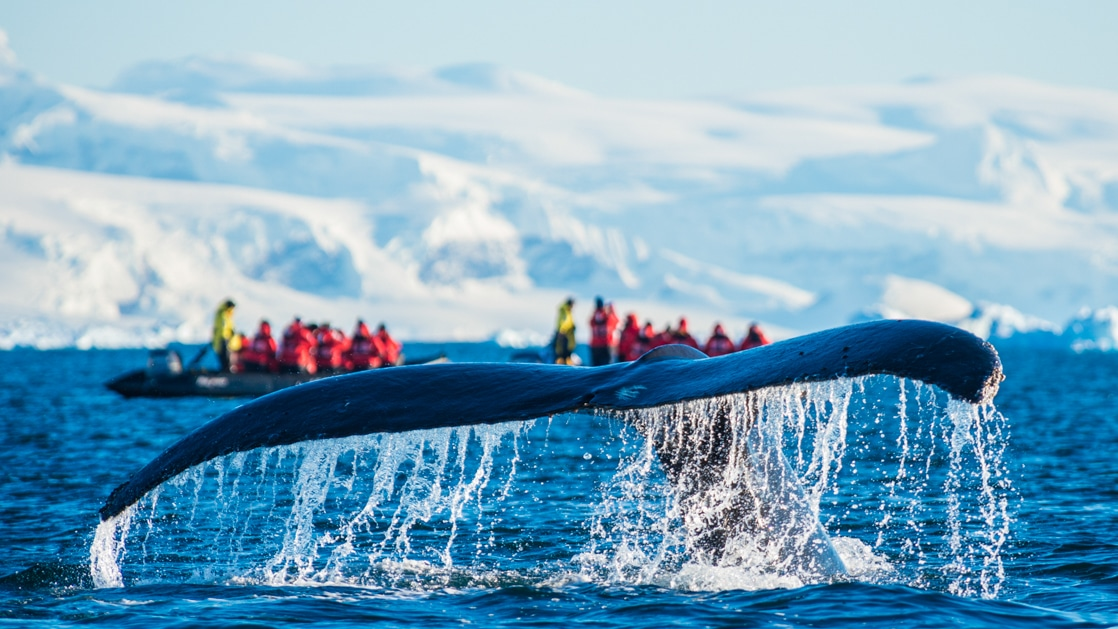 Whale tail sprays water while polar travelers dressed in red jackets look on from Zodiacs at a distance.