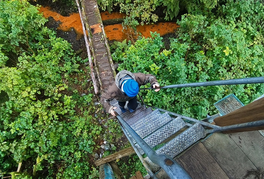 Looking down the ladder from inside an observation tower in Alaska, a female guests climbs up from a green lush forest floor.