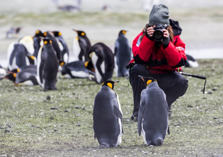 On South Georgia Island a female traveler kneels to take a picture of the two king penguins standing 6 feet in front of her
