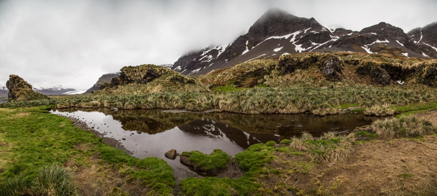 a pond with lush green vegetation growing around with tall mountains in the background on a foggy day in antarctica