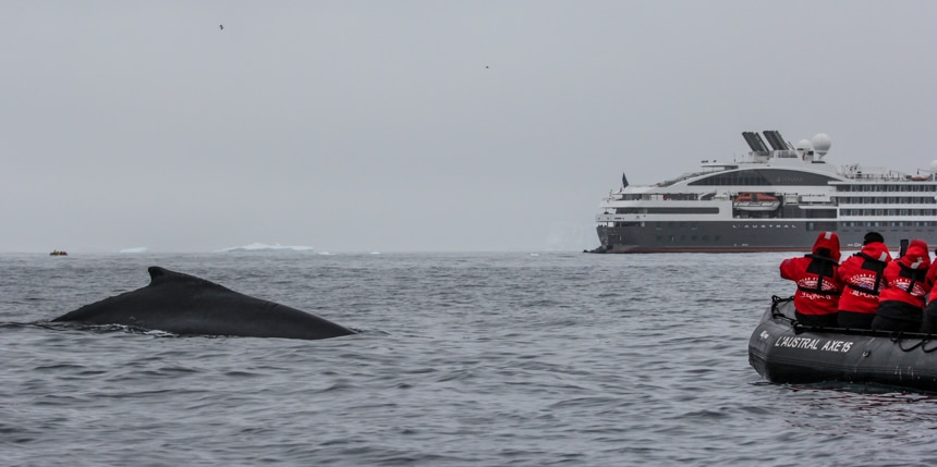a whale coming up for air with a group of people floating in a zodiak and a large luxury ship in the background