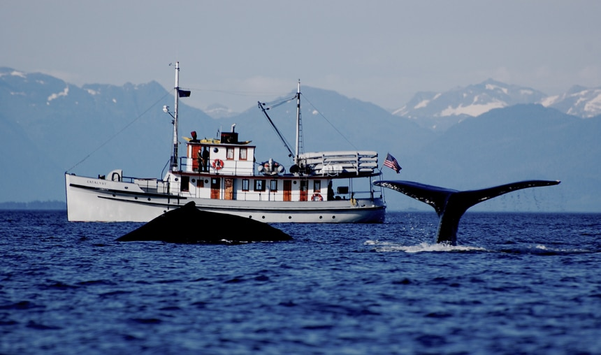 Whale tail and a whale beaching in front of a small ship cruise in Alaska.