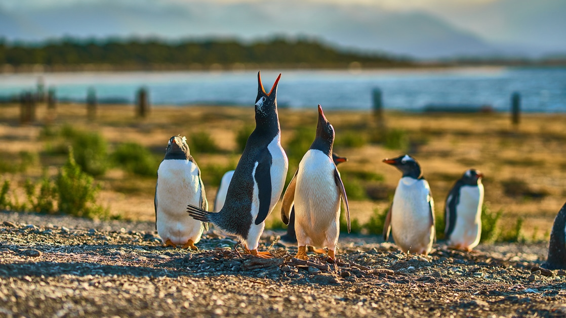 Photo by: Vitaly/Quark Expeditions