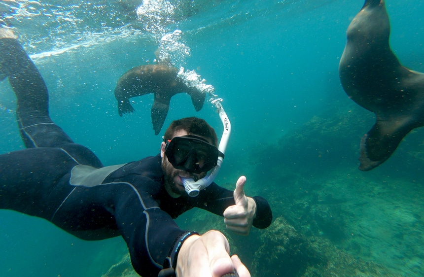 An underwater photo of a male wearing a black wetsuit and snorkel gear as he gives a thumbs up while swimming with two Galapagos seals.