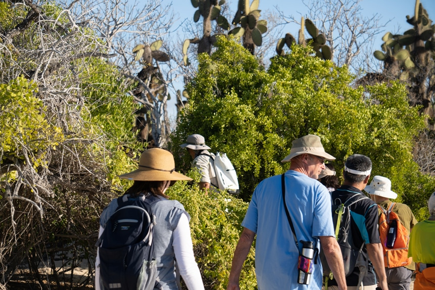 Wearing hats and visors a group of cruise guests hike through the Galapagos island landscape of cacti and green mangrove trees,