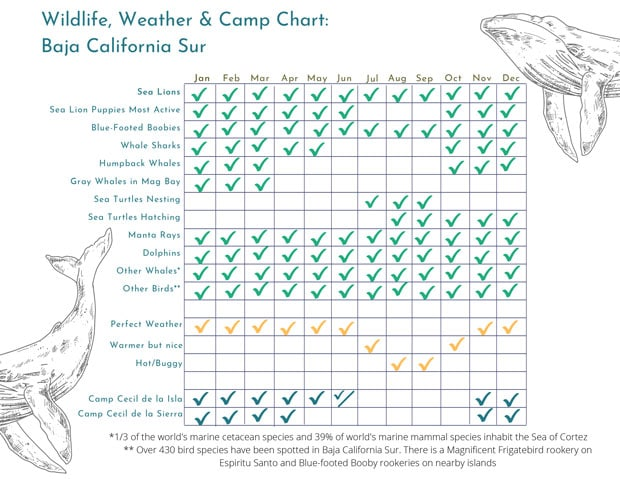 Chart showing check marks for various wildlife & properties by month in Baja California Sur.