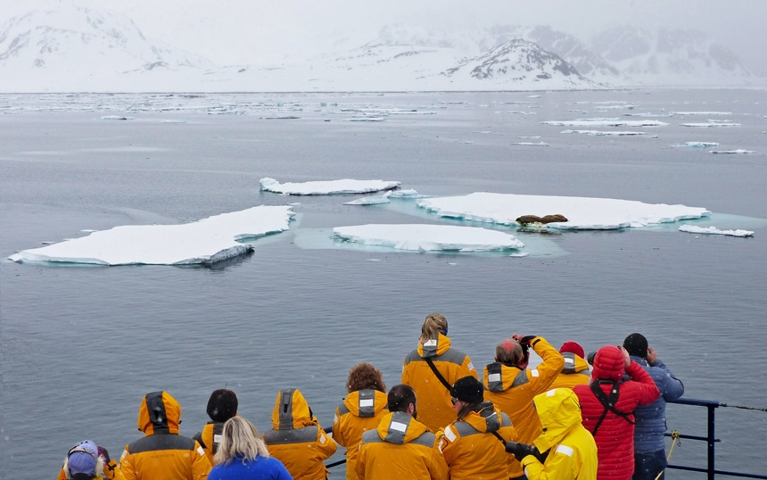 Arctic cruise passengers wearing yellow parkas gather on the top deck to take photos of walrus laying on floating ice bergs.
