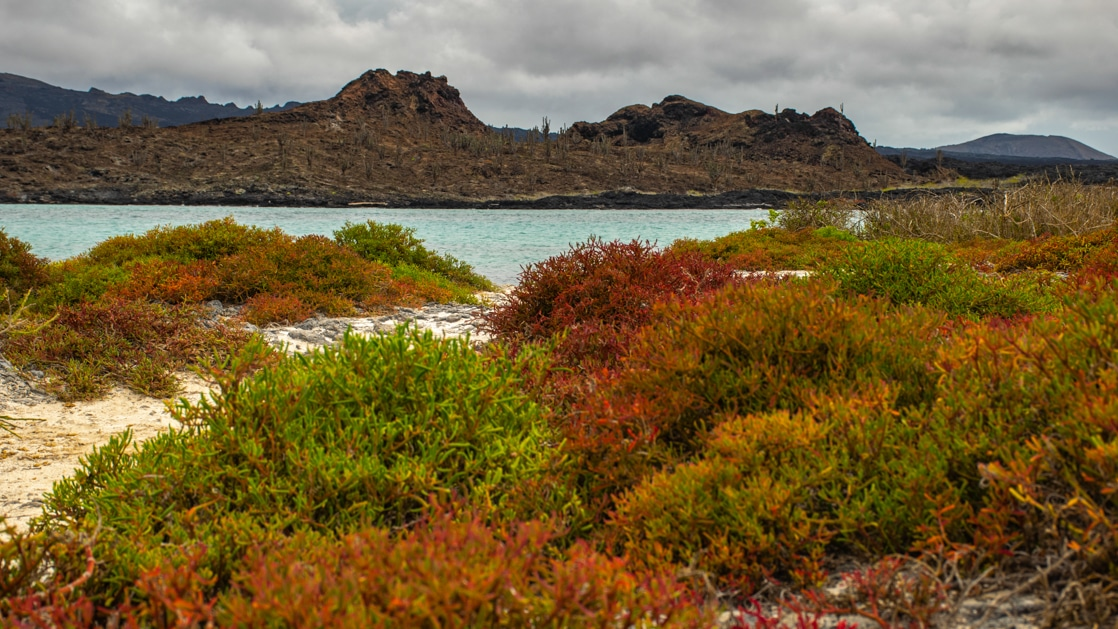Bright green, red & orange bushes line a white-sand path towards aqua ocean with dark hill in the background, on Endemic Galapagos cruises.