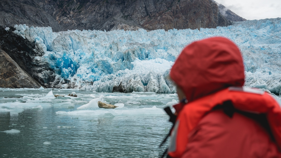 Alaska traveler in bright red jacket looks at seals swimming beside a large blue glacier during the Wild & Wooly Alaska Cruise.