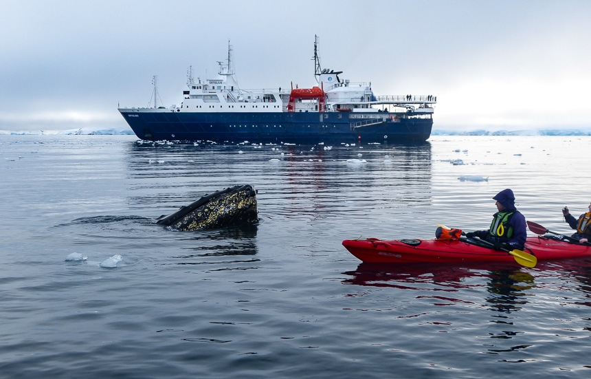 Guests paddling a red double kayak watch a whale breach the polar water in front of them, beyond them a blue and white Antarctic ship floats on the horizon.
