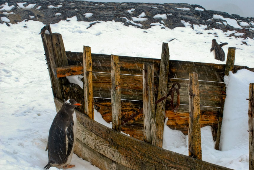 Black gentoo penguin with orange beak stands in front of an abandoned boat on a snowy day. History is an answer to why go to Antarctica.