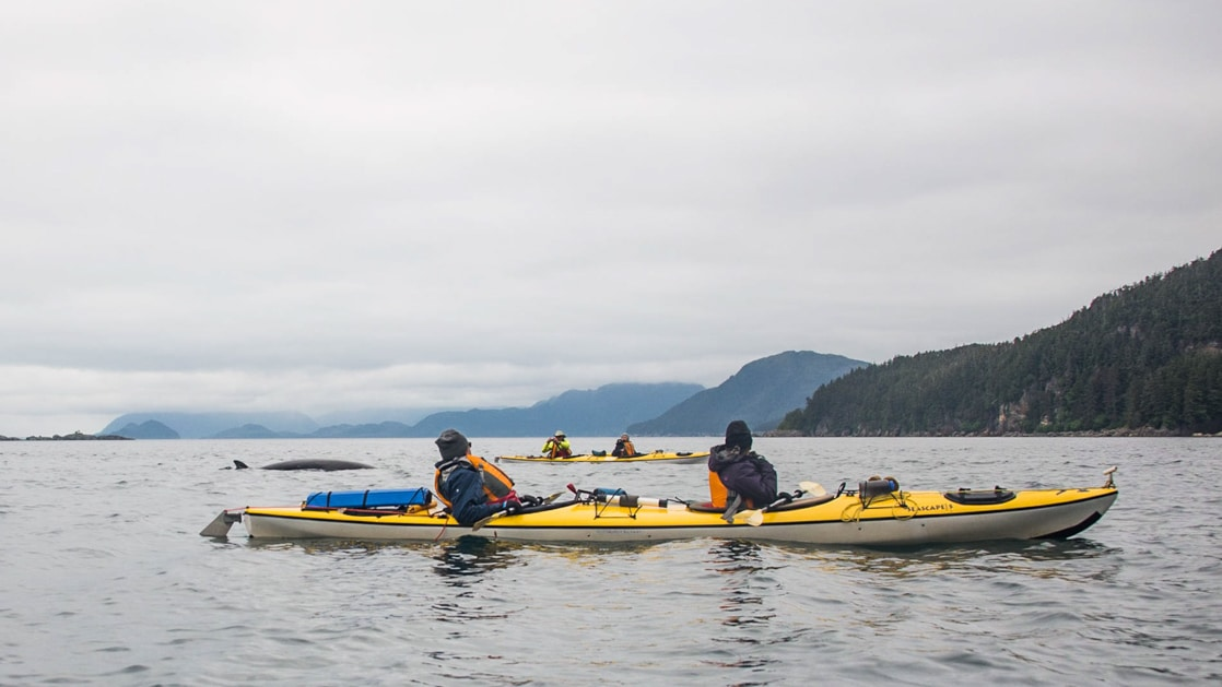 2 yellow tandem kayaks sit in calm water as paddlers watch a whale surface above the water on a cloudy day during the Alaska Odyssey.