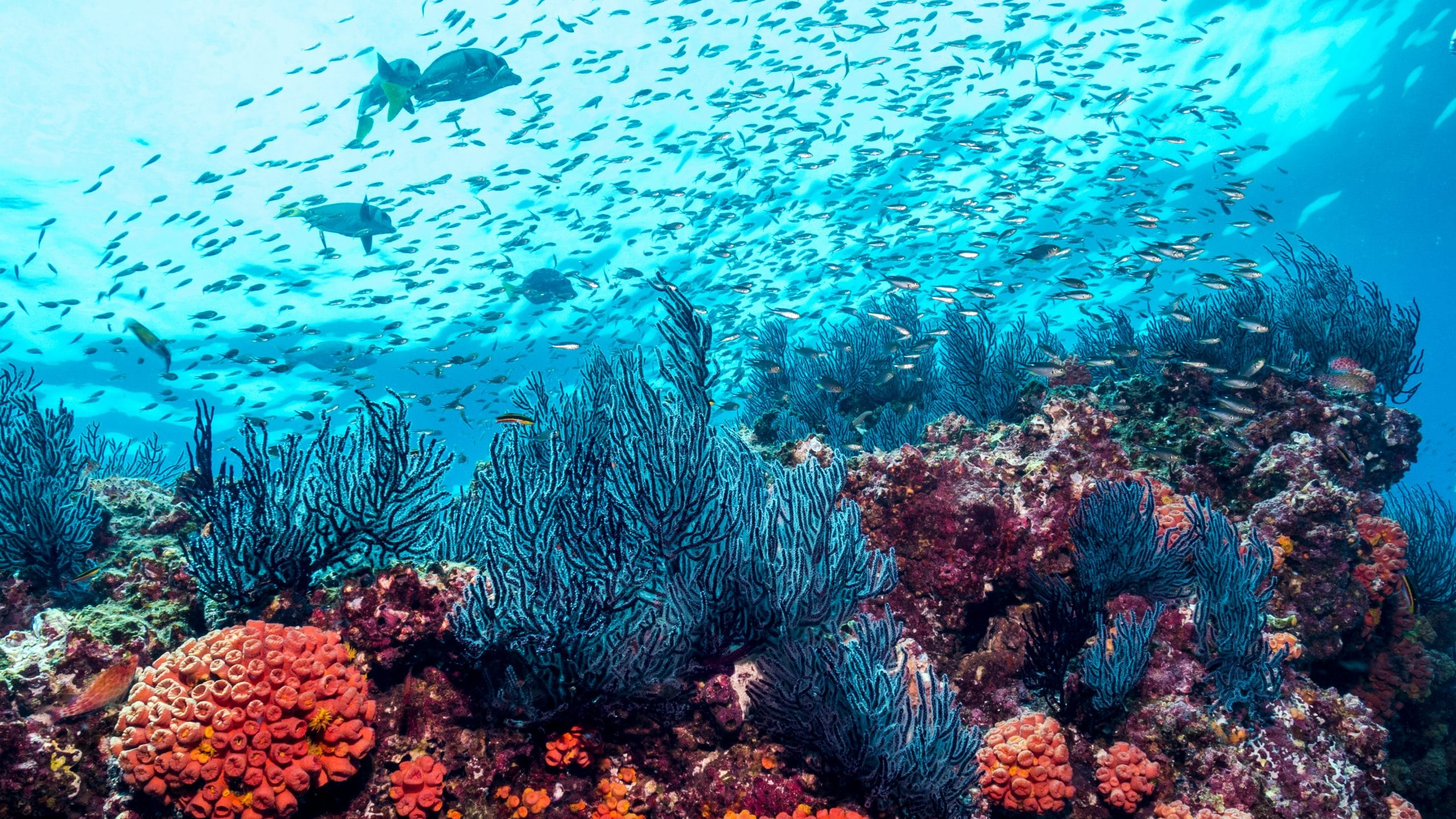 Colorful coral reef with red, orange & aqua marine features, looking up tp water's surface with a school of fish swimming above.