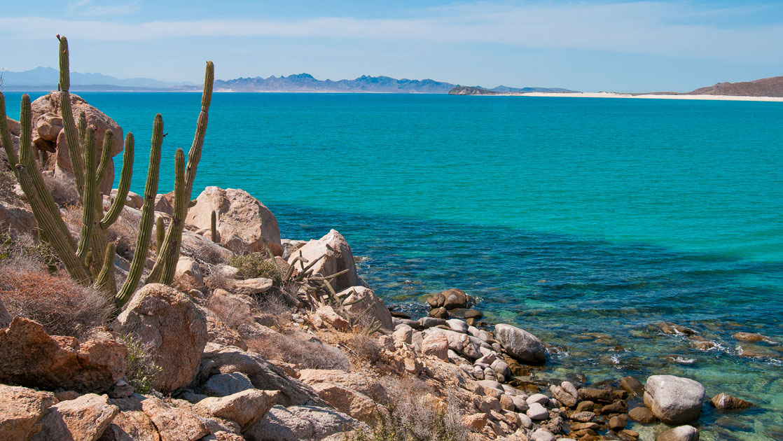 Looking out to turquoise sea from a rocky shoreline with boulders & a green cactus during the Baja California & Sea of Cortez Odyssey.