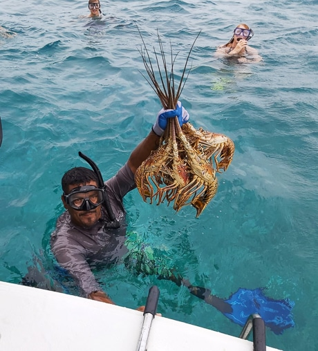 From the water, a man wearing snorkel gear and gloves grabs onto a sailboat while holding a handful of red and orange lobster in the air.