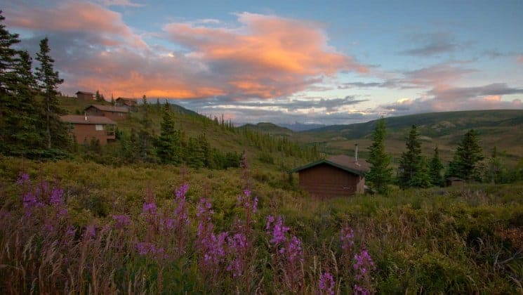 Five cabins amid lupine and grass at Camp Denali lodge in Denali National Park with sunset clouds