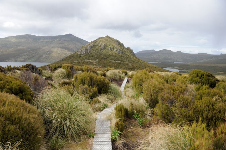 A wooden walkway leads through tall shrubs in various shades of green & beige, leading to a tall summit cone on a cloudy day on Campbell Island, New Zealand.
