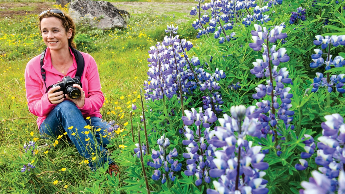 Woman in jeans & pink shirt sits & photographs purple lupin wildflowers in a grassy field on a cruise to Iceland & Greenland.